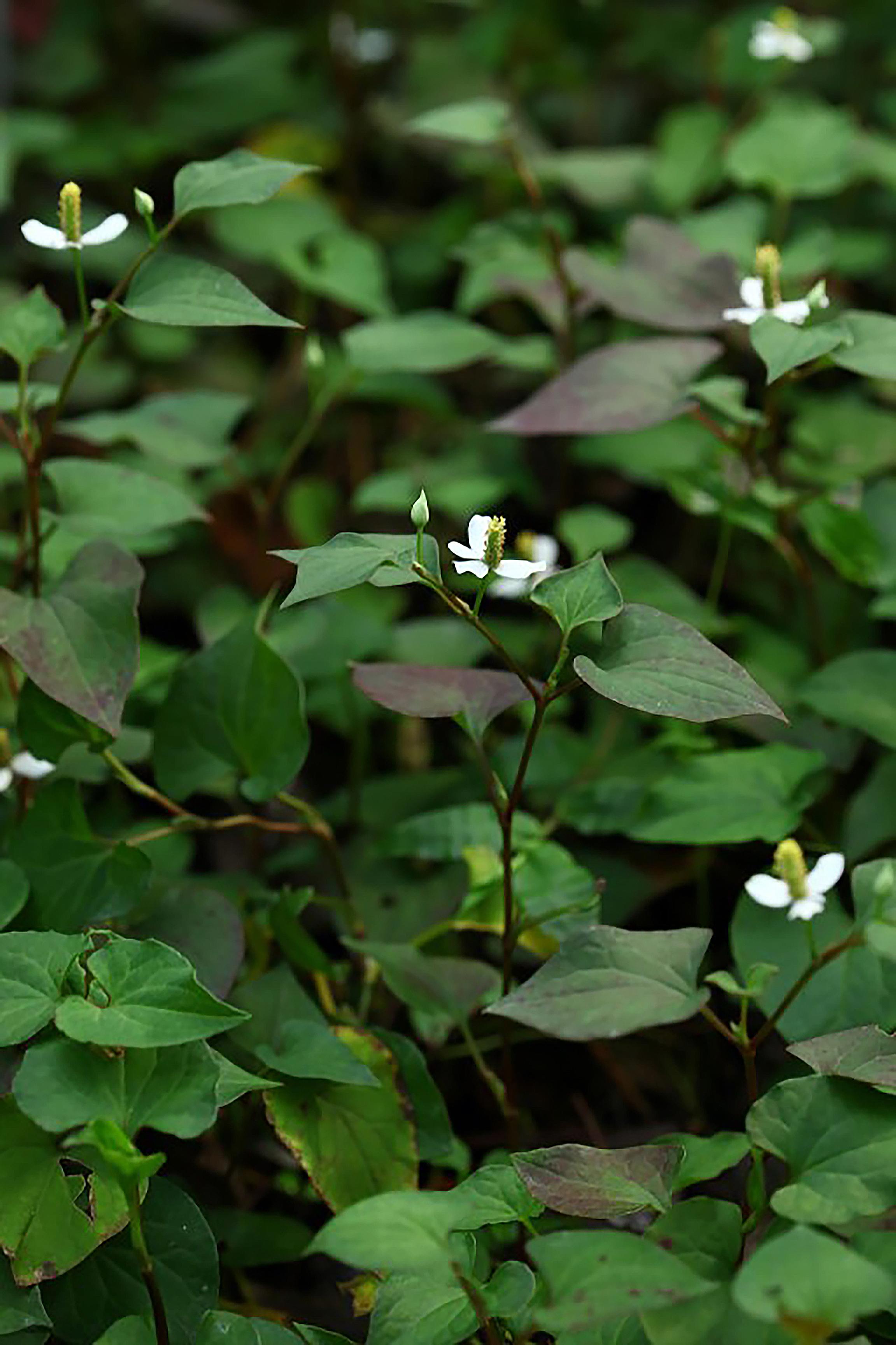 花博「虎爸農莊」共榮作物栽培法 倡導自然和諧精神