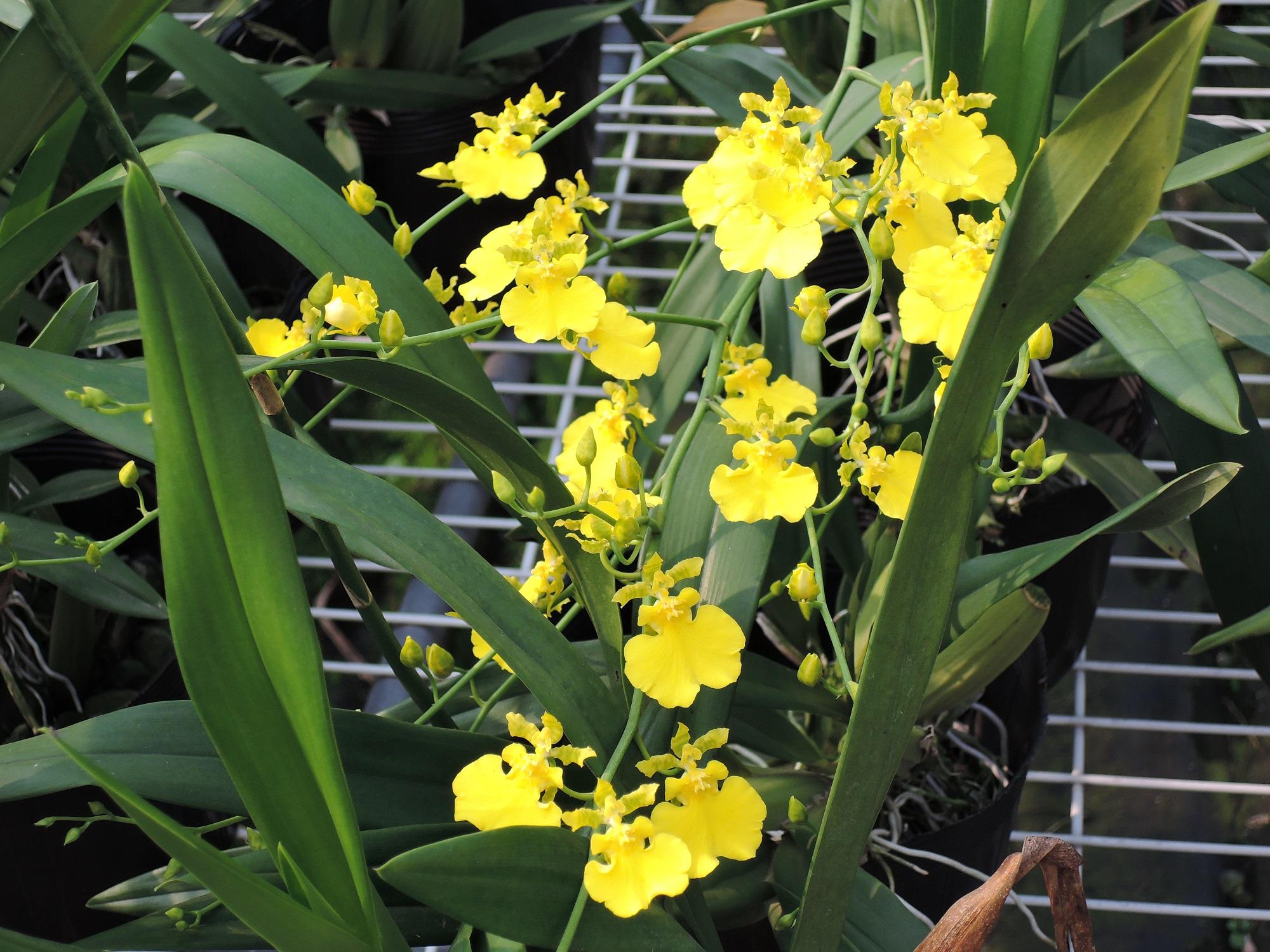 迎接花博 台中花農陳帝緯推廣在地花卉之美